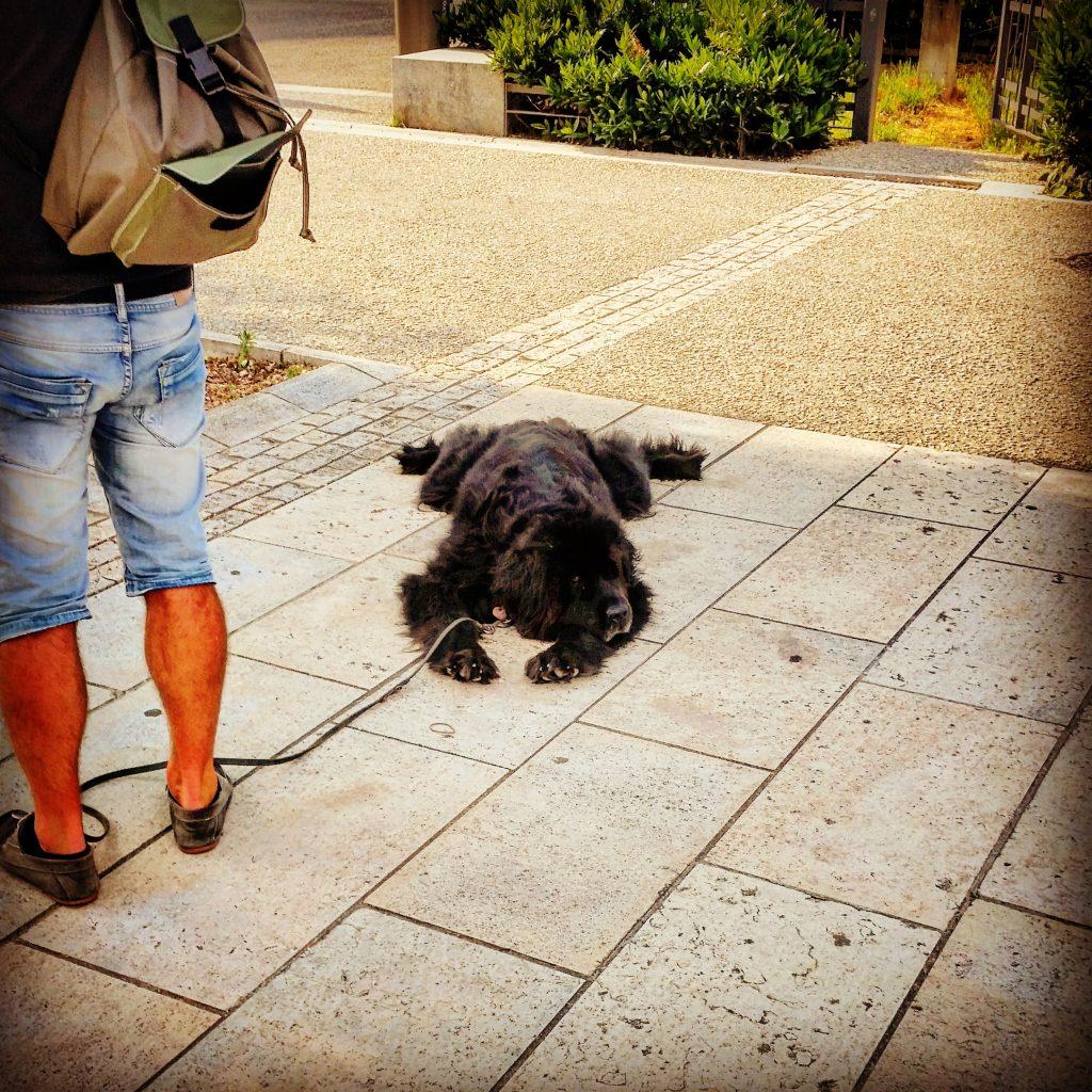 Hundeteppich